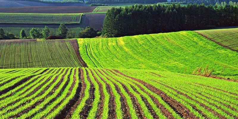 «Скасування мораторію на продаж землі буде програшем селян і виграшем олігархів», - Тягнибок