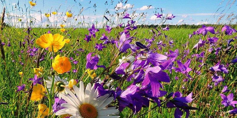 Прогноз погоди: грози і сонце розділять Україну, температура буде комфортною