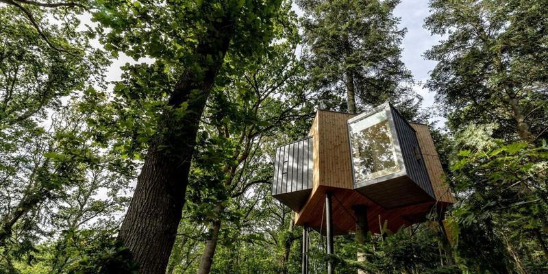 У Данії відкрили готель на верхівках дерев (фото)