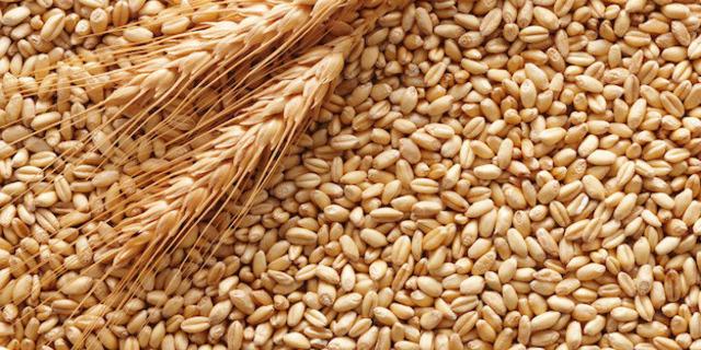 Україна встановила рекорд з експорту зернових