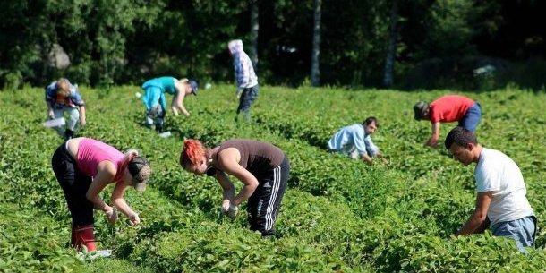 У мережі з'явилося відео, як поляк б'є українських заробітчан (відео 18+)