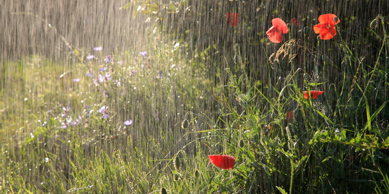 Погода на сьогодні: майже всю Україну накриють дощі з грозами (карта)