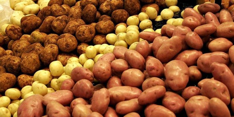 В Україні назріває дефіцит картоплі: якими будуть ціни і чим замінити овоч