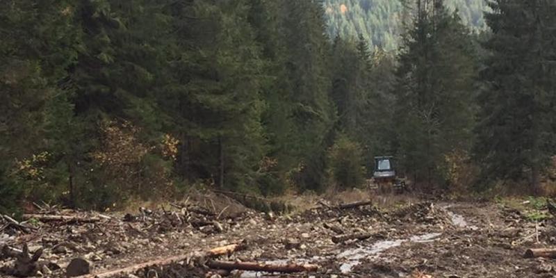 СБУ викрила масштабну незаконну вирубку дерев у Карпатському біосферному заповіднику