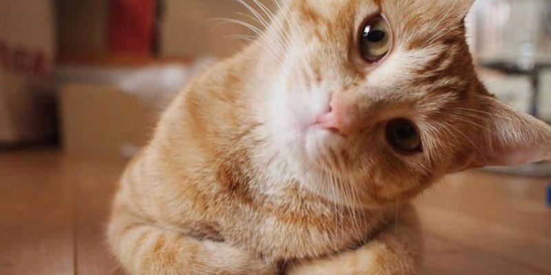 Сьогодні відзначають день котів: 10 цікавих фактів