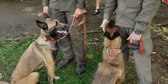 У Львові нагородили собак, які служили на Донбасі