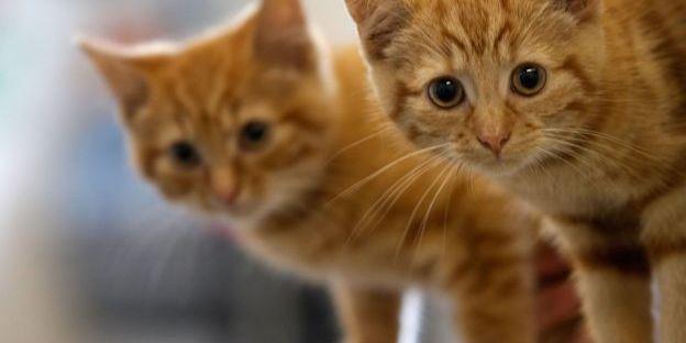 Годування вуличних котів: у Бельгії запровадили правила