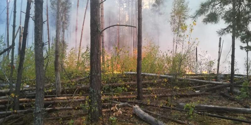 У Чорнобильській зоні вже добу горить ліс (фото)
