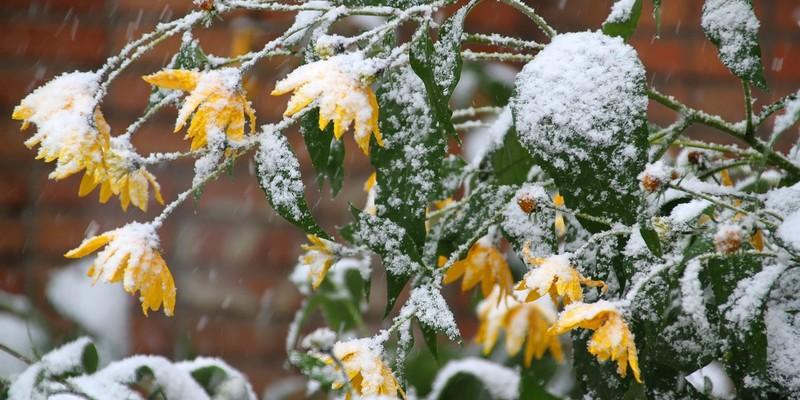 Цього тижня випаде сніг, - синоптики