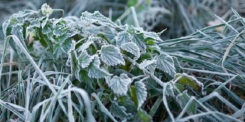 В Україні вночі очікуються заморозки – ДСНС