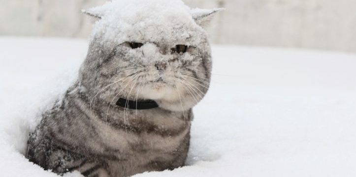 Стало відомо, коли в Україні випаде перший сніг