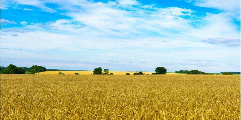 Обласні ради звернулися до Зеленського із проханням відтермінувати введення ринку землі в Україні