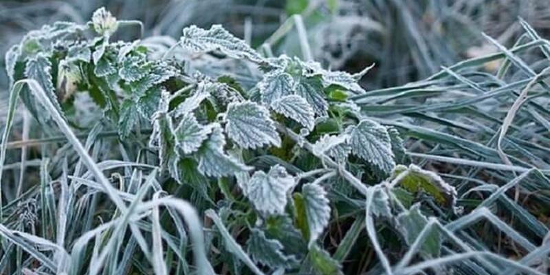 Найближчої ночі в деяких регіонах України очікуються заморозки – температура повітря знизиться до -3 градусів