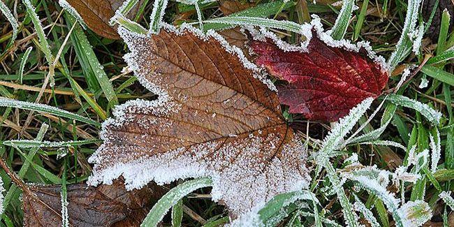 Завтра в Україні очікуються сильні заморозки