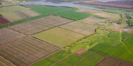 Фермерів можуть позбавити паїв, якщо вчасно не оформити право власності на землю