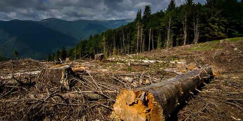 «Годі рубати»: Рада заборонила масову вирубку лісу у Карпатах