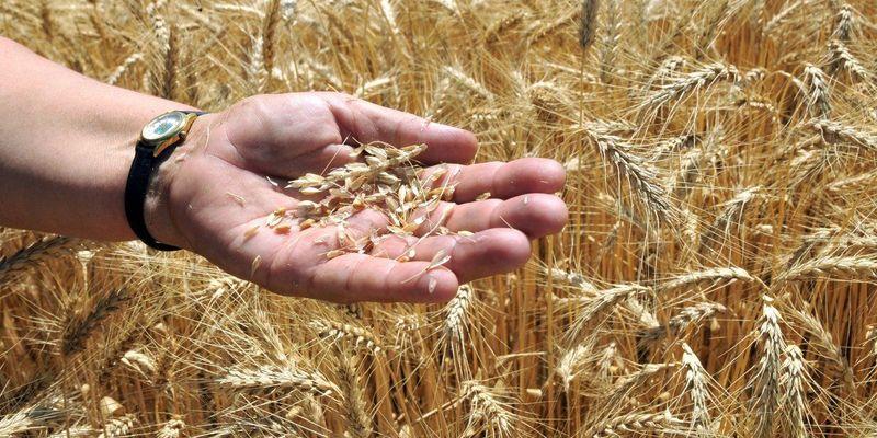 Які країни найбільші експортери пшениці в світі (інфографіка)