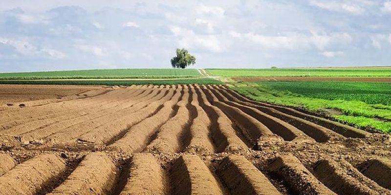 Закон про ринок землі планують ухвалити у грудні — голова партії «Слуга народу»