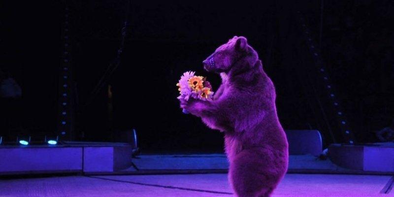 У Чернівцях заборонили гастролювати циркам з тваринами