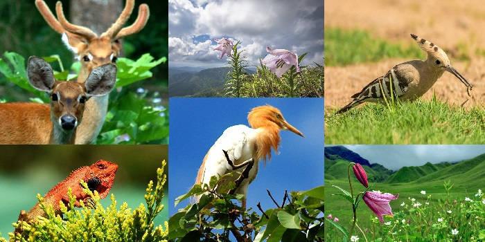 Вже найближчим часом близько мільйона видів рослин і тварин можуть зникнути з нашої планети