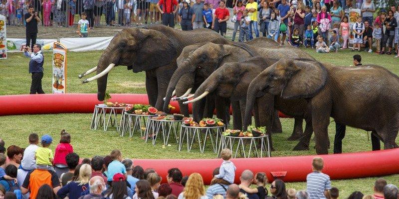 Усі державні цирки протягом року відмовляться від тварин у виставах, – міністр