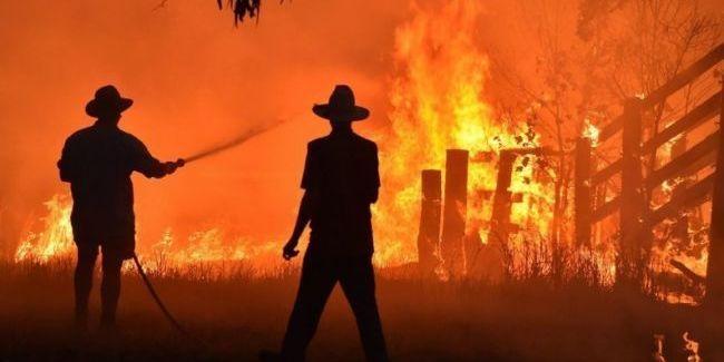 Масштабні пожежі в Австралії: українки допомагають рятувати тварин