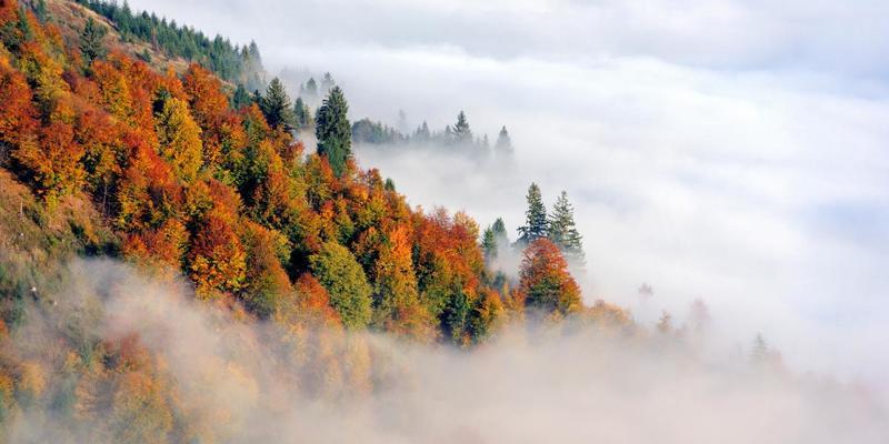 Україну вкриє густий туман: синоптики назвали області