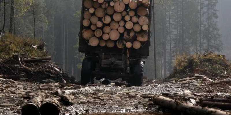 Незаконна вирубка лісу в Україні: заборонити не можна дозволити