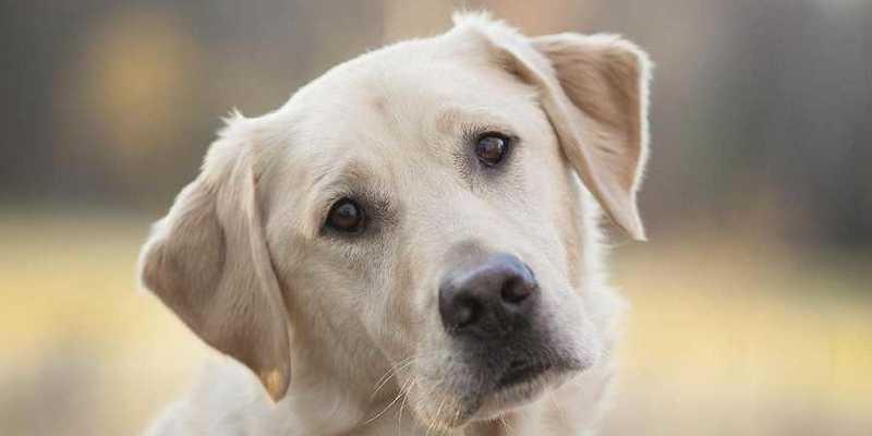 В Україні почала роботу «гаряча лінія» з порятунку тварин
