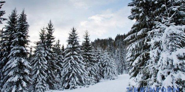 Прикарпаття завалило 1,2 м снігу: деталі апокаліпсису
