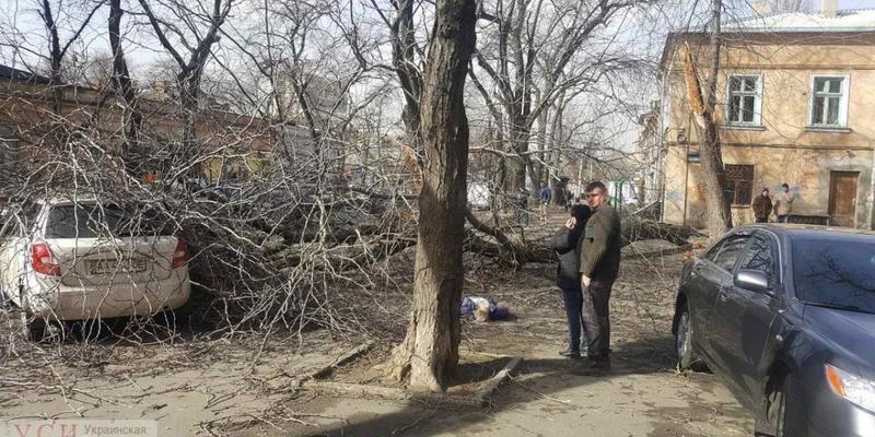 В Одесі через сильний вітер на жінку впало дерево, вона загинула: фото