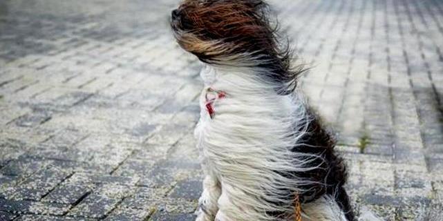 В Україну прийде квітневе тепло і штормовий вітер