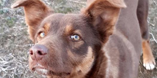 В Україні зареєстрували електронну петицію з вимогою знищити всіх бездомних собак