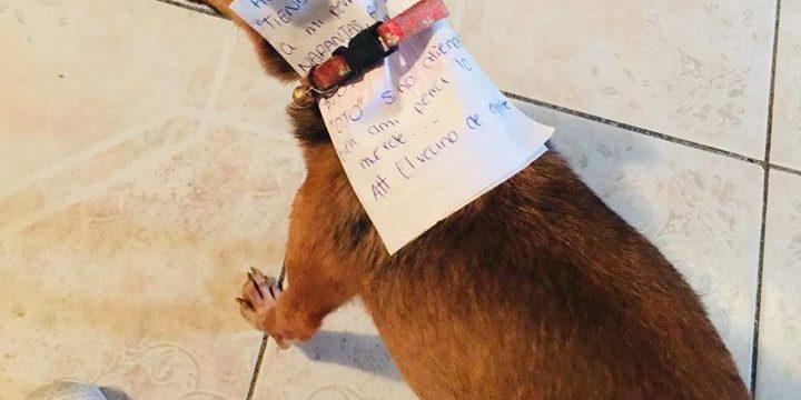 У Мексиці чоловік відправив за чипсами власного собаку, щоб не порушувати карантин