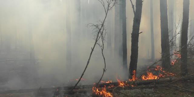 На Житомирщині разом з сухою травою спалили сільську раду