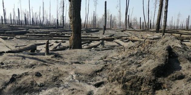 На гасіння пожеж під Чорнобилем виділили майже 45 мільйонів з резервного фонду