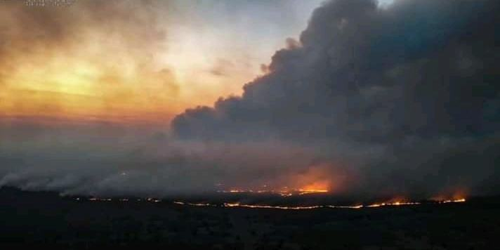 Пожежі в зоні відчуження ЧАЕС загасили, - Держекоінспекція