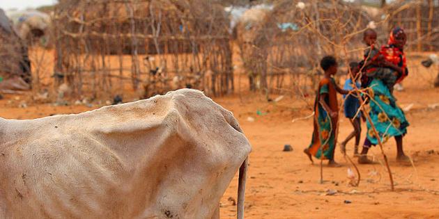 Кількість голодних у світі може подвоїтися через пандемію - ООН