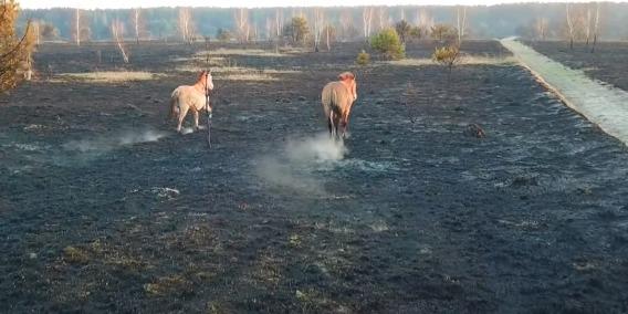 У Чорнобильському заповіднику розповіли, як від пожеж постраждали рослини і тварини