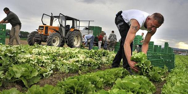 ВУкраїні обвалились ціни на свіжі овочі через закриті ринки