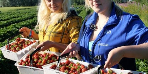 У Польші готуються організовувати чартерні рейси для українських заробітчан
