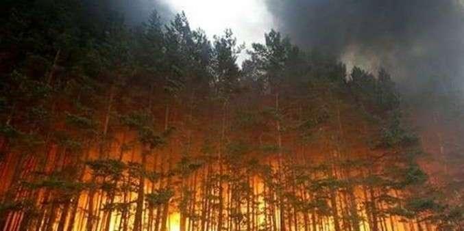 У Чорнобильській зоні рятувальникипродовжують локалізовуватидваосередкипожеж
