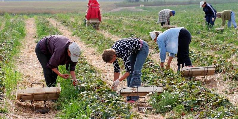 Уряд розглядатиме кожен запит щодо сезонних працівників з України окремо – коментар МЗС та Мінекономіки