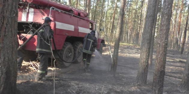 Лісові пожежі у Житомирській і Київській областях локалізовані