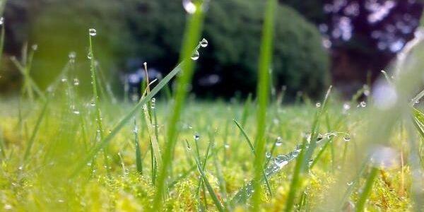 Спека у понеділок і дощі з грозами у вівторок: прогноз погоди на початок тижня