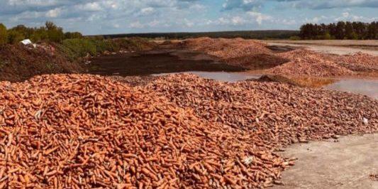 На Київщині підприємець викинув безліч моркви, яку не вдалося продати