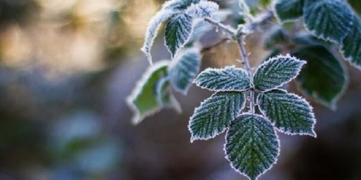 У деяких областях України очікуються заморозки
