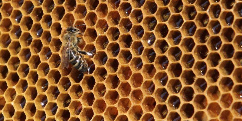 Пасічники скаржаться на мор бджіл через обробку полів агрохімікатами