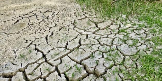 Аграрії Одещини через посуху втратили половину озимих зернових